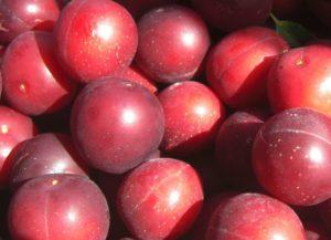 Health Benefits of Albakara Fruit