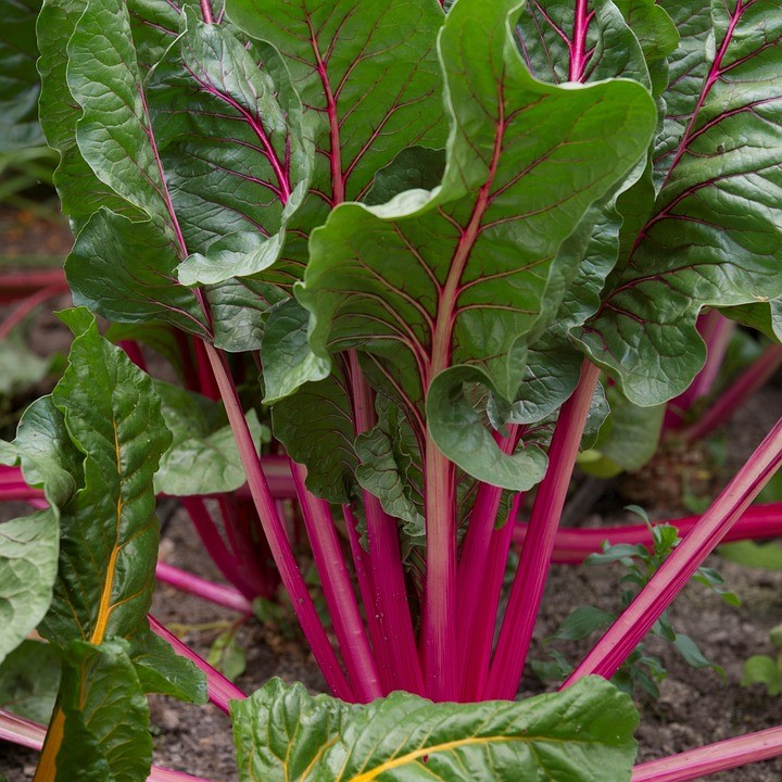 juicing beet greens