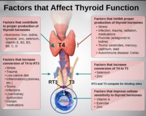 Factors that Affect Thyroid Function